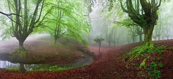 Wide Photograph - The Forest Maravillador IIi by Juan Pixelecta
