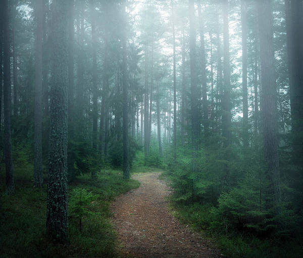 Pine Trees Photograph - The Forest Of Secrets by Christian Lindsten