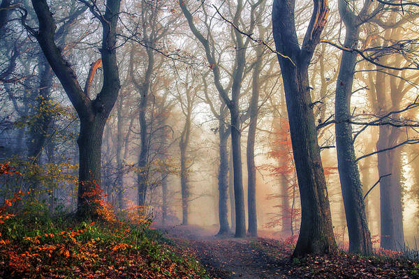 Wall Art - Photograph - The Forest Path. by Leif L??ndal