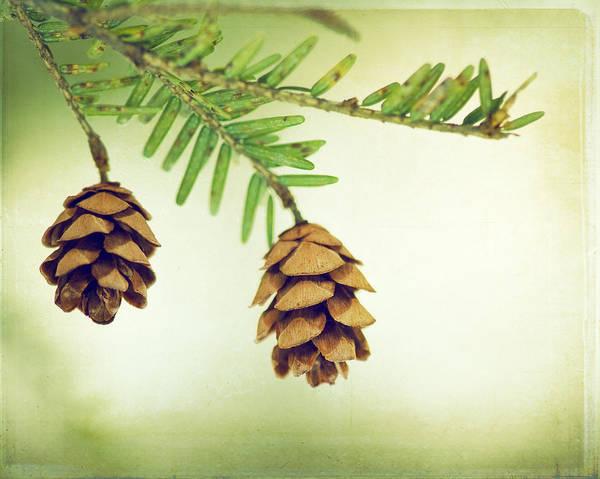 Wall Art - Photograph - The Fragrant Breath Of Pine by Carolyn Cochrane