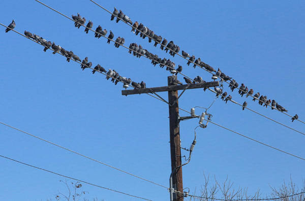 Utility Pole Photograph - The Gang Is All Here by Linda Phelps