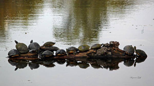 Critters Photograph - The Gangs All Here by Suzanne Gaff