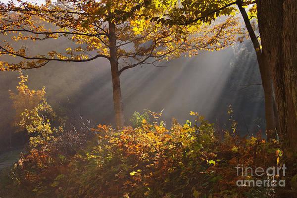 Photograph - The Garden Of Eden by Charles Kozierok