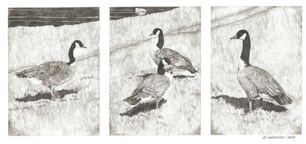 White Goose Drawing - The Gathering by Paul Shafranski