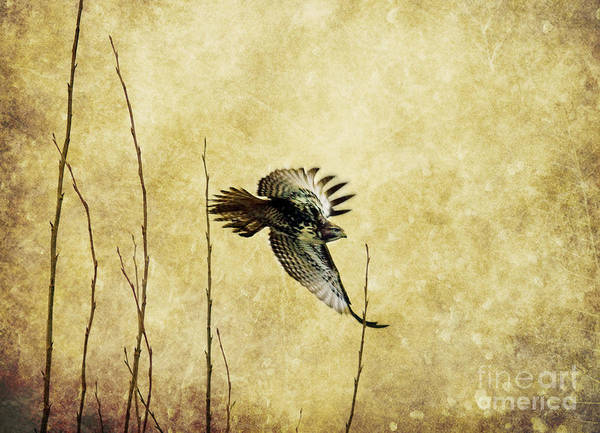 Wall Art - Photograph - The Getaway by Rebecca Cozart