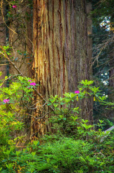 Redwood City Wall Art - Photograph - The Giant And The Flower by Kunal Mehra