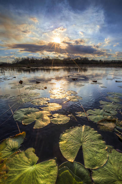 Everglades Wall Art - Photograph - The Glades by Debra and Dave Vanderlaan