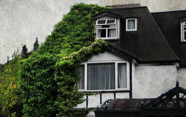 Wild Grape Photograph - The Glendalough Hotel. Wicklow. Ireland by Jenny Rainbow