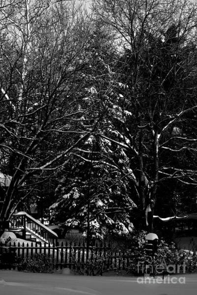 Photograph - The Glorious Art Of A Snowy Winter by Frank J Casella