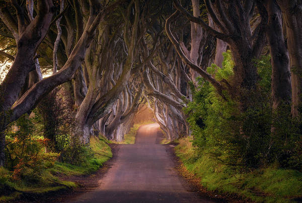 Way Wall Art - Photograph - The Glowing Hedges by Daniel F.
