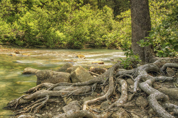 Photograph - The Gnarled Roots Of Haw Creek by Jason Politte