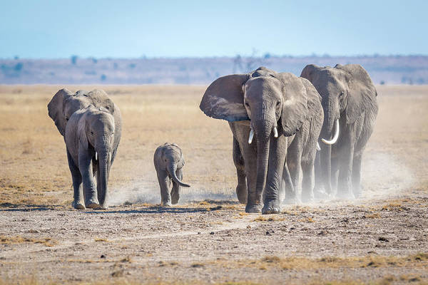 Amboseli Wall Art - Photograph - The Gods Of Yesteryear. by Jeffrey C. Sink