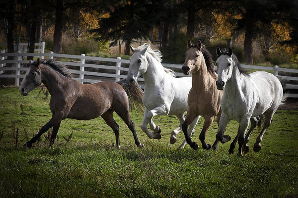Photograph - The Goldendale Four by Wes and Dotty Weber