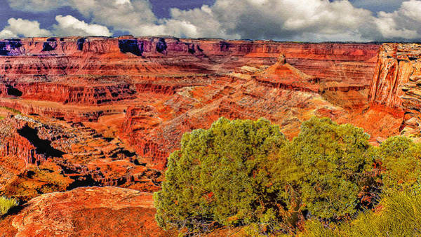 Wall Art - Photograph - The Grand Canyon Dead Horse Point by Bob and Nadine Johnston