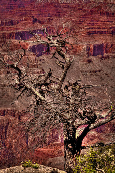 Photograph - The Grand Canyon Viii by David Patterson