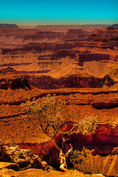 Photograph - The Grand Canyon X by David Patterson