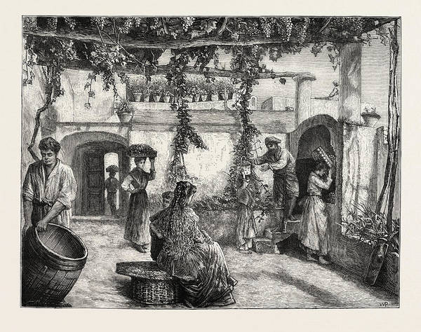Grape Drawing - The Grape Harvest In Italy by Italian School