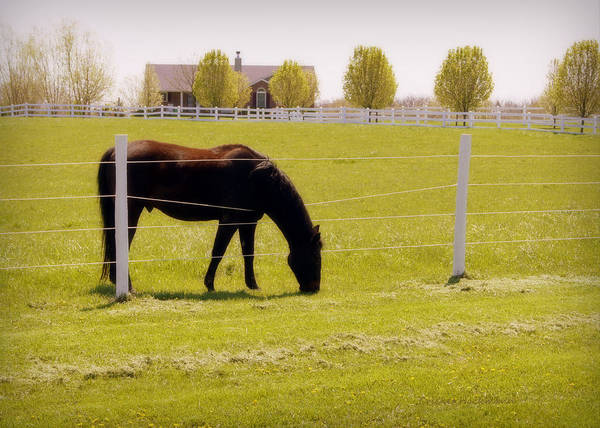 Photograph - The Grass Is Greener by Cricket Hackmann