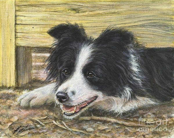 Border Collie Painting - The Great Escape by John Silver