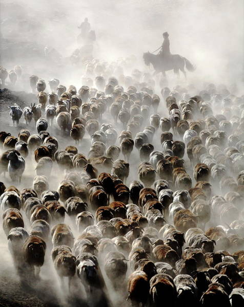 Cowboy Photograph - The Great Migration Of China by Adam Wong