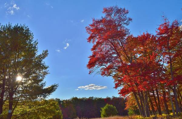 Wall Art - Photograph - The Great Outdoors by Thomas  MacPherson Jr