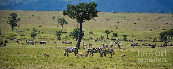 Photograph - The Great Savanna Plains by Gary Keesler