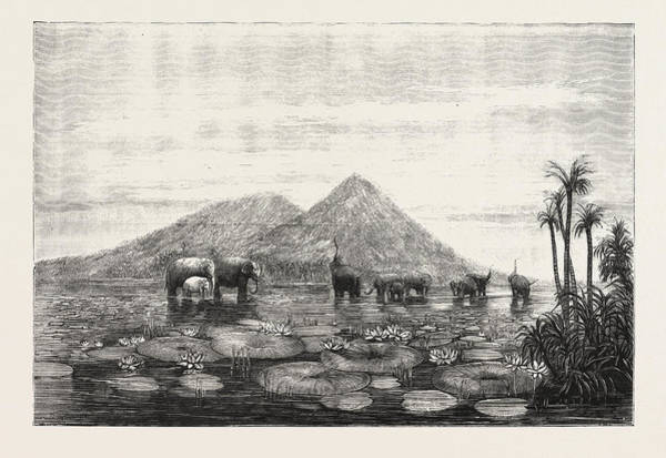 B B King Drawing - The Great Tank Of Minery In The Island Of Ceylon by Sri Lankan School