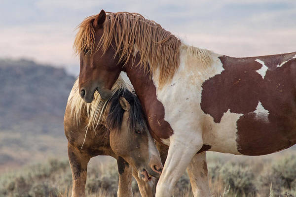 Crazy Horse Photograph - The Greeting by Sandy Sisti