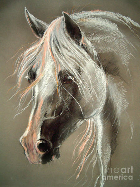 Equine Drawing - The Grey Horse Soft Pastel by Angel Ciesniarska