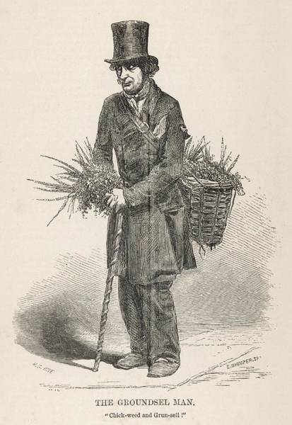 Weeds Drawing - The 'groundsel Man' - A Street  Trader by Mary Evans Picture Library