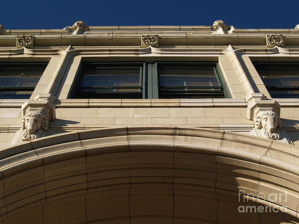 Asheville Wall Art - Photograph - The Grove -- Looking Up by Anna Lisa Yoder