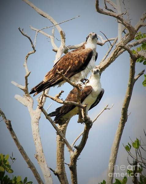 Fish Eagle Photograph - The Happy Couple by Quinn Sedam