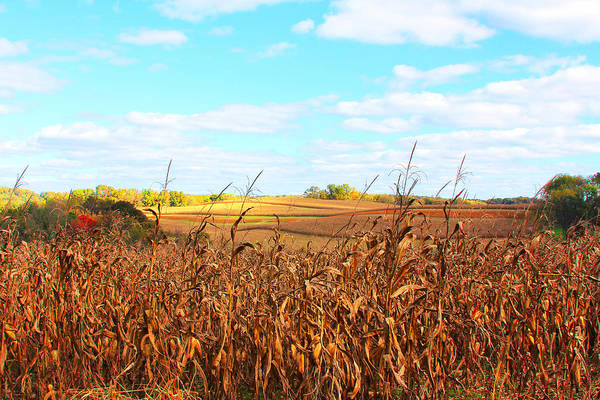 Photograph - The Harvest Is Ready by Trina  Ansel