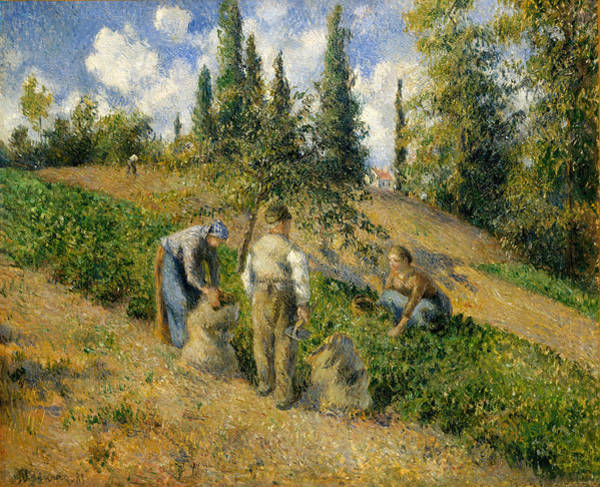 Wall Art - Painting - The Harvest. Pontoise by Camille Pissarro