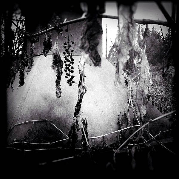 Photograph - The Haunting by Susan Maxwell Schmidt