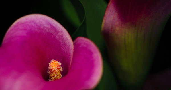 Photograph - The Heart Of The Lily by Christi Kraft
