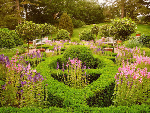 Formal Garden Photograph - The Herb Garden 2 by Jessica Jenney