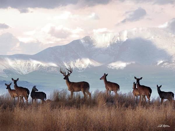 Deer Mixed Media - The Herd by Bill Stephens