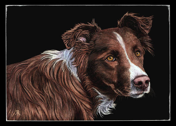 Drawing - The Herder by Ann Ranlett