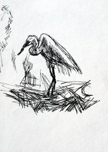 Drawing - The Heron by Paul Sutcliffe