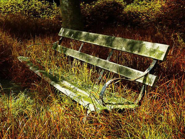 Wall Art - Photograph - The Hidden Bench by Mark Rogan