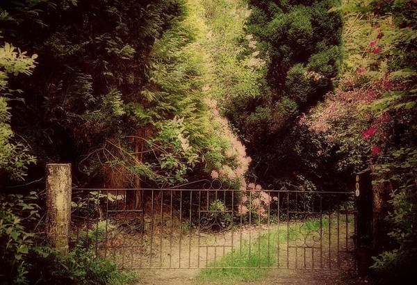 Photograph - The Hidden Garden by Marilyn Wilson