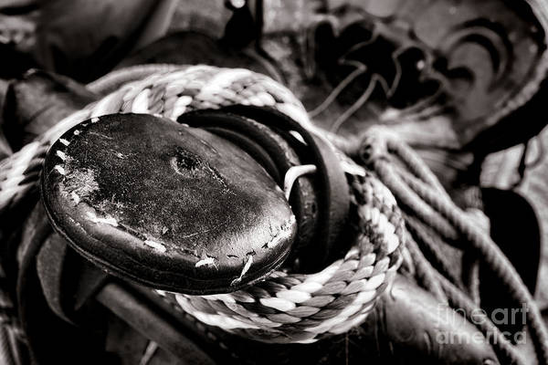 Roping Photograph - The Horn by Olivier Le Queinec