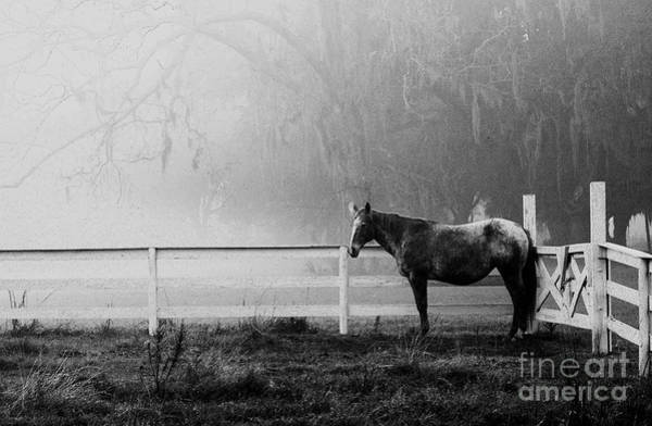 Photograph - The Horse And The Fog by Scott Hansen