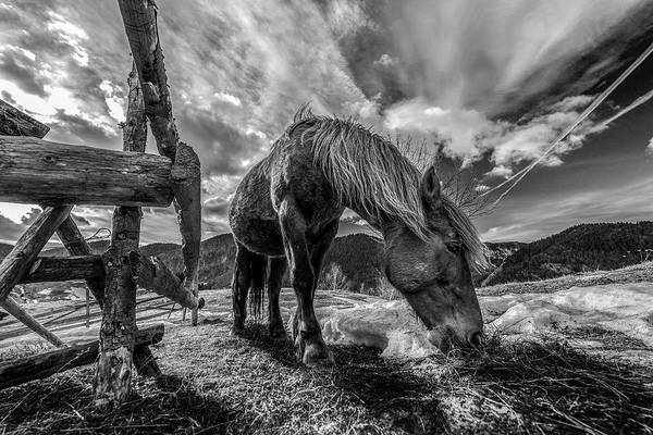 Eating Photograph - The Horse by Faris