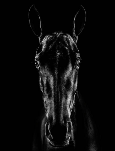 Wall Art - Photograph - The Horse In Noir by Jackson Carvalho