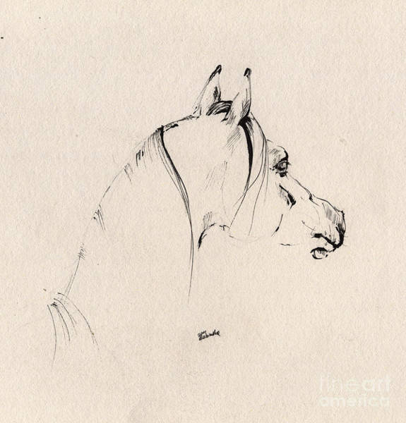 Equine Drawing - The Horse Sketch by Angel Ciesniarska