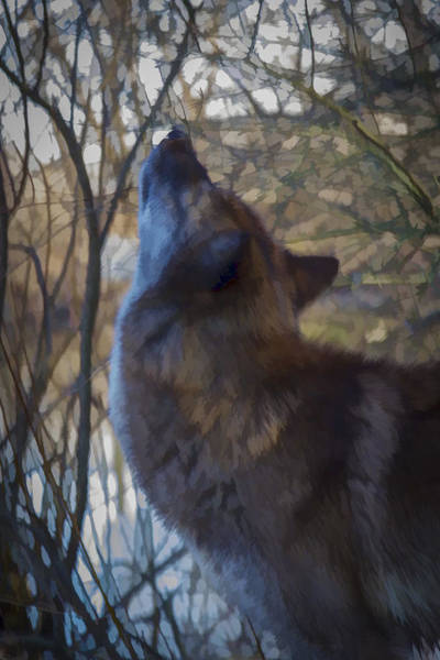 Photograph - The Howl by Jack R Perry