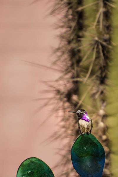 Photograph - The Hummingbird Rocky by  Onyonet  Photo Studios