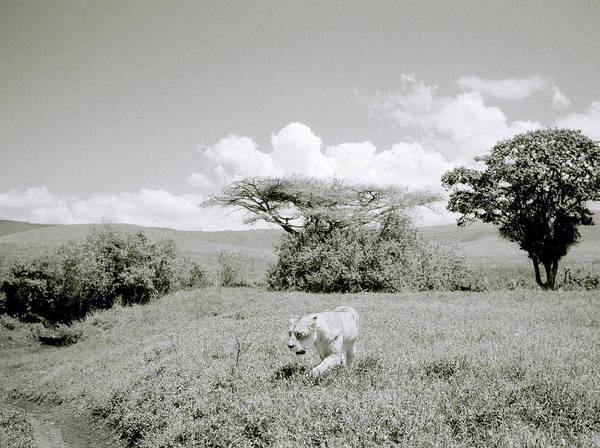Photograph - The Hunt by Shaun Higson